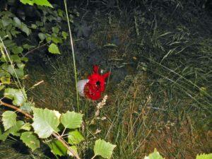 Roter Drache im Garten von Sandra Kascheike