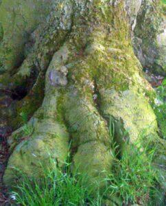 Detailaufnahme: Fuß eines Walddrachens (Foto: A.S.)