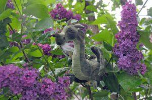 Stunde der Drachen: Ein Fliederdrache gut getarnt in einem blühenden Flieder (c) Bundesamt für magische Wesen