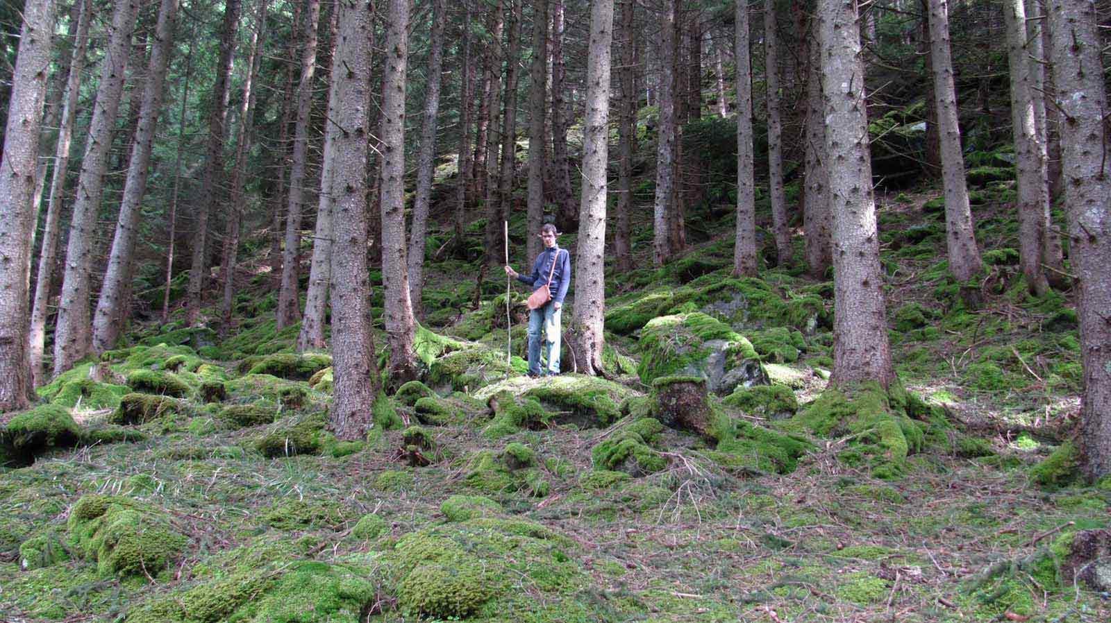 Mondelf Sleiranir im Wald (Foto: Sleiranir Wenger)