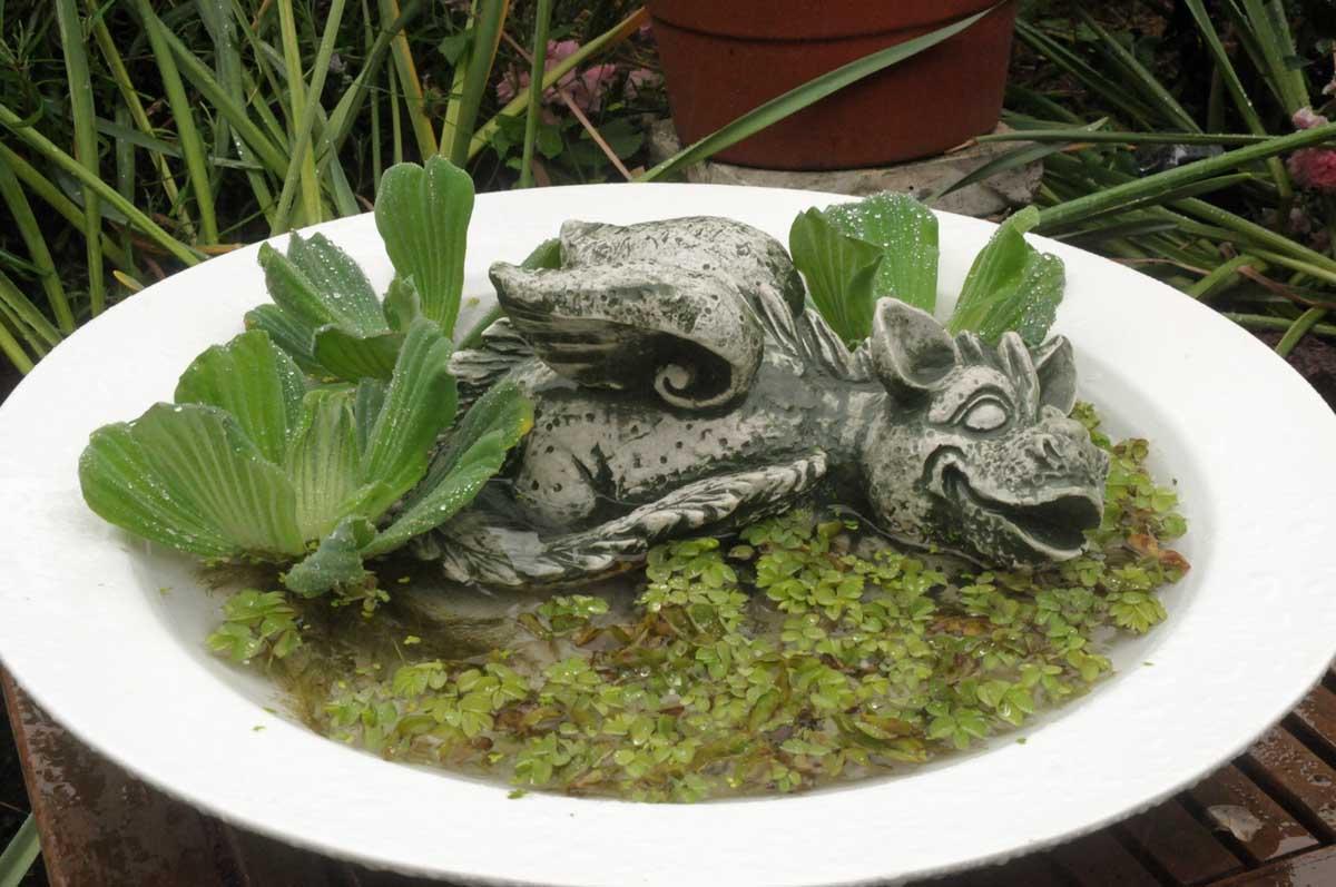 Jungtier des Grüngrauen Sumpflurchlings beim Planschen (Foto: Bundesamt für magische Wesen)
