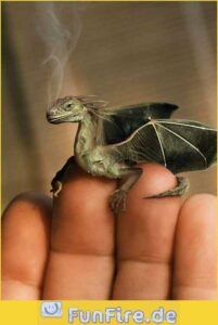 Stunde der Drachen: Ein frisch geschlüpfter Drache aus Handaufzucht